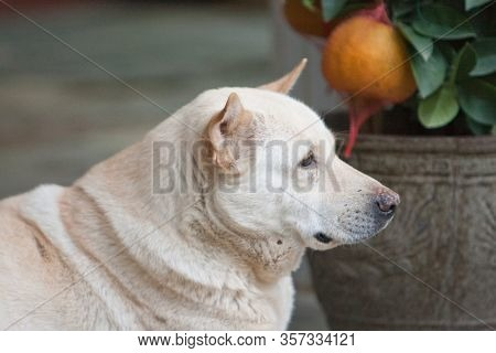The Dog At The Out Door With Nature Back Ground