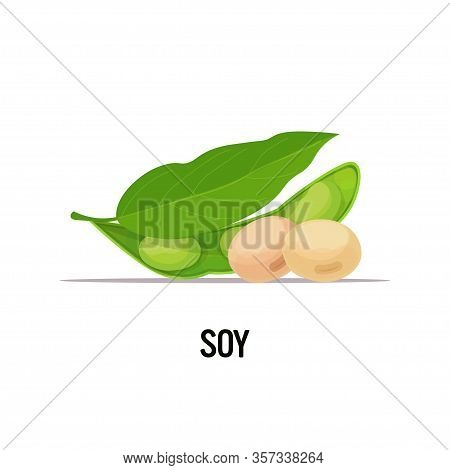 Soy Beans Organic Healthy Vegetarian Food On White Background Vector Illustration