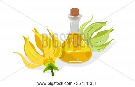 Yellow Flowers Of Cananda Odorata Or Ylang Ylang Are Near Glass Corked Jar With Gold Fragrant Essent