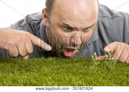 A Man Frustrated By Growing Weed In His Lawn.