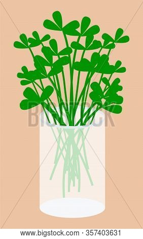 Greenery For Seasoning Or Adding Flavor To Dish. Parsley Herb For Food Accompaniment. Natural Organi
