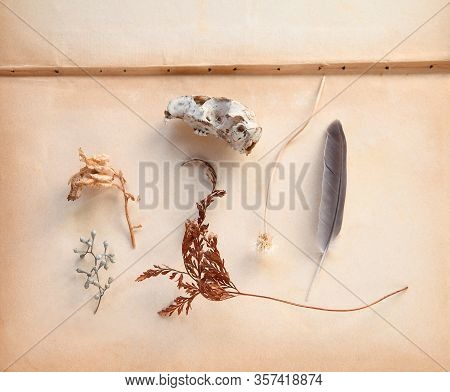 Arrangement Of Natural Objects Including A Fern Frond, Seed Pods, A Feather And Small Animal Skull O