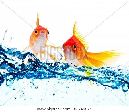 Goldfisch, springen über Schrägstrich blaues Wasser