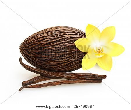 Cacao and vanilla pods and orchid flower isolated on white background