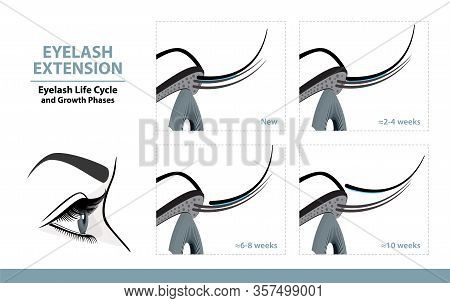 Lash Extension Life Cycle. How Long Do Eyelash Extensions Stay On. Side View. Infographic Vector Ill