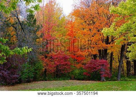 Striking Colors Of Fall Foliage Near Mount Royal, Montreal, Canada.