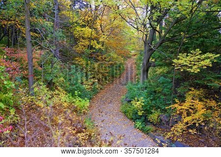 The View Of Of A Hiking Trail With Stunning Fall Foliage Near Mount Royal, Montreal, Canada