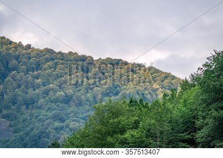 Thick Green Forest On A Hillside In The Morning Mist. Green Mountain Forest In Spring Or Summer. Clo