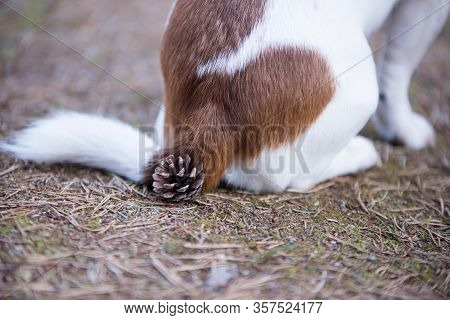 A Pinecone Under The Buttocks Of A Seated Dog