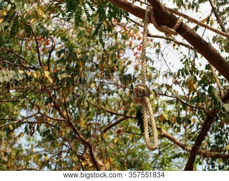 Rope Hanging From Tree.a Rope Loop Hanging Like A Noose From The Branch Of A Tree.suicide Concept.