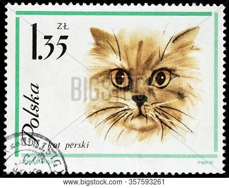 Luga, Russia - October 15, 2019: A Stamp Printed By Poland Shows Head Of Persian Longhair  (shirazi)
