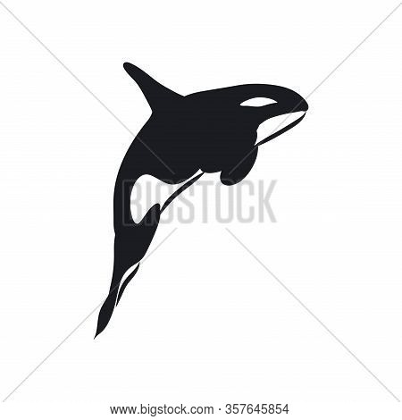 Orca Black And White Linear Paint Draw Killer Whale Illustration