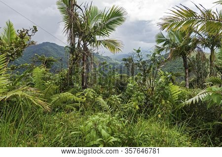 Mountains And Valleys Of El Yunque Rainforest In Puerto Rico