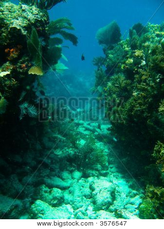 Shots Of Scuba Diving In The Florida Keys
