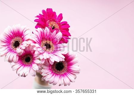 Pink Gerbera Flowers On Pastel Background. Happy Mothers Day Design. Fresh Natural Flowers. Pink Ger