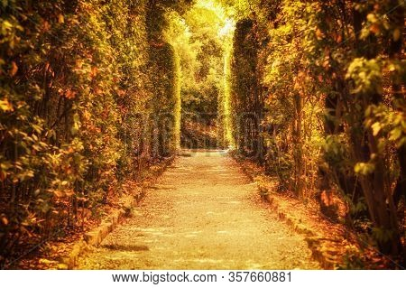 Mystical Sunny Alley In The Boboli Gardens. The Concept Of Tourism, Travel, Fantastic Beauty Of Natu