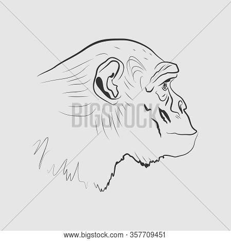 The Line Art Of Chimpanzee Head. Portrait Of Ape