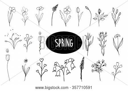 Twigs, Leaves. Isolated Graceful Plants For Design. Set Of Black Vector Illustrations On A White Bac