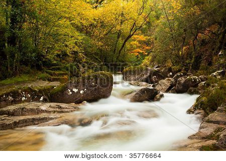 Autumn river at the park with beautiful yellow trees foliage