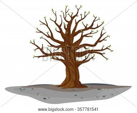 One Wide Massive Old Oak Tree In Springtime With Young Leaves Isolated Illustration, Majestic Oak Wi