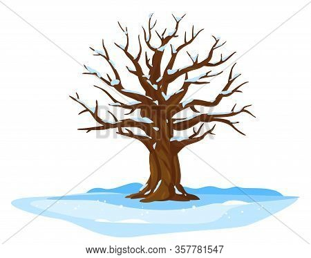 One Wide Massive Old Oak Tree With Snow On Branches Isolated Illustration, Majestic Oak Without Foli