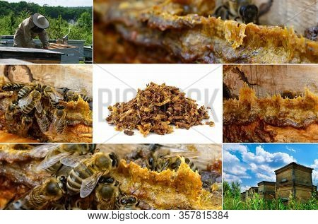 Propolis In The Middle Of A Hive With Bees. Bee Glue. Bee Products. Apitherapy. Propolis Treatment.