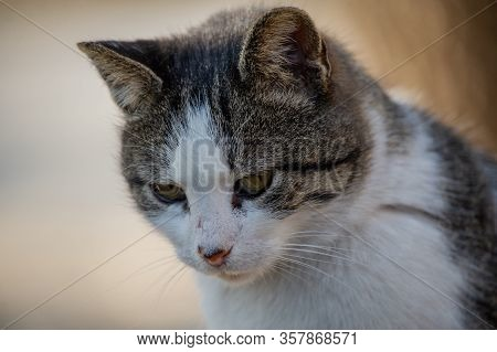 A White Spotted Street Cat Sits On A Fence. Cat, Walk, Street, Spring. Spring In Cats. Sunny Daywhit