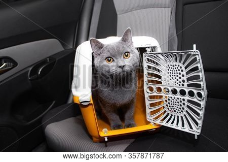 Pet Carrier In The Car On The Seat . Safe Transportation Of Pets.. Traveling With An Animal.