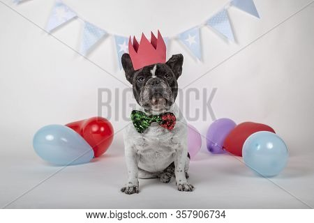 Funny Portrait Of Cute French Bulldog Wearing Silly Birthday Hat And Blue Tie Leaning Out On A Table