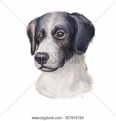 Sprollie Digital Art Illustration Of Cute Dog Muzzle Isolated On White. English Springer Spaniel And