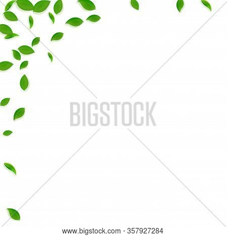Falling Green Leaves. Fresh Tea Chaotic Leaves Flying. Spring Foliage Dancing On White Background. A