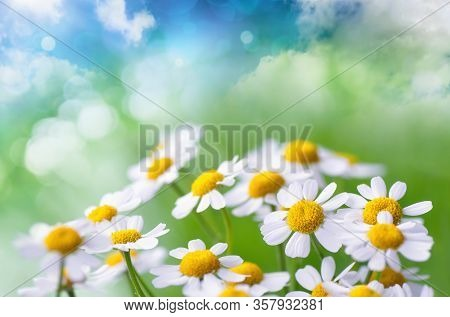Camomile Flowers On Abstract Fantasy Background Of Green Meadow And Blue Sky