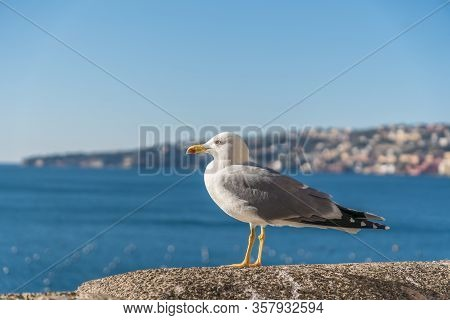 Seagull Bird Is Standing Near Sea. City In Background.