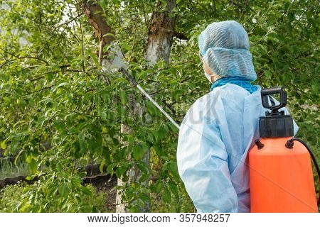 Woman In A Protective Suit And A Mask Is Spraying An Apple Tree From Fungal Disease Or Vermin With A