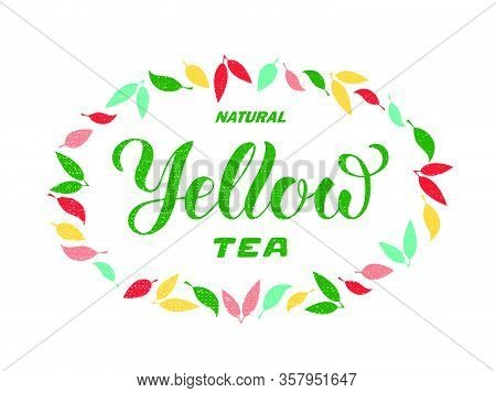 Vector Illustration Of Natural Yellow Tea Brush Lettering For Package, Banner, Flyer, Poster, Bistro