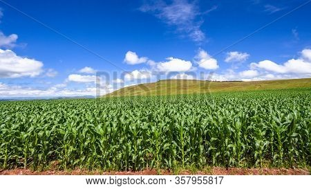 Farm Crops Blue Sky Clouds Panoramic