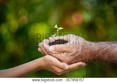 Senior Man And Child Holding Green Sprout In Hands