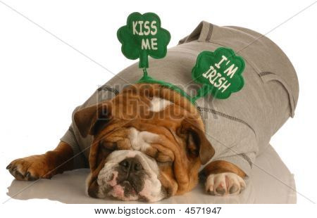 St Patricks Bulldog Laying Down Sleeping
