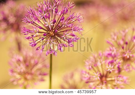 Natural beautiful macro flowers in spring garden