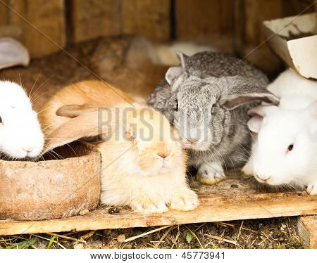 Rabbits' Hutch