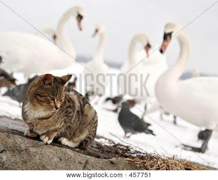 Not Friendly Birds