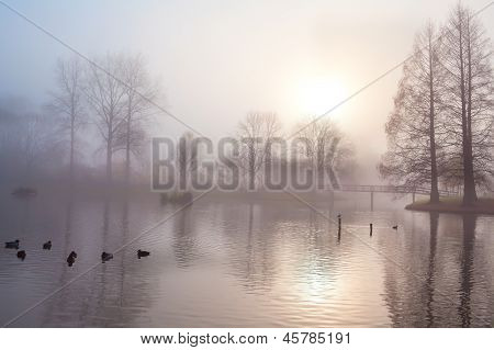 Misty Morning In Autumn Park