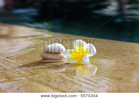 Flower And Stones In Hotel Spa