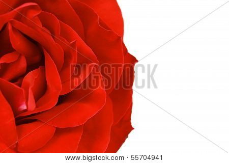 Close up of red rose petal. Background.