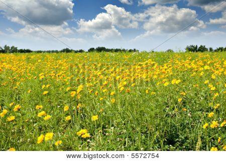 Missouri Meadow