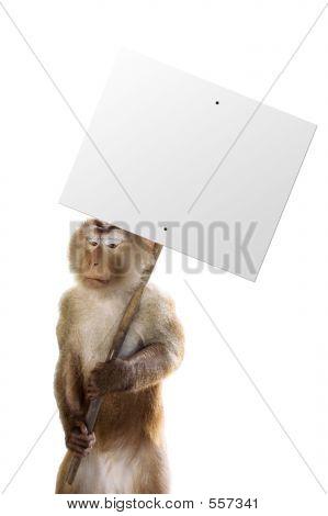 Unhappy Monkey Working