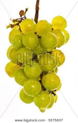 Wet Green Grapes On White Beckground