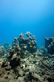 bottom of tropical sea with coral reef on blue water background at great depth poster