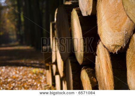 Pile of  chopped wood in a forest during winter poster