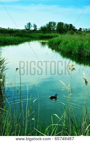 a duck in a pond in Els Muntanyans natural park in Torredembarra, Spain, with a retro effect